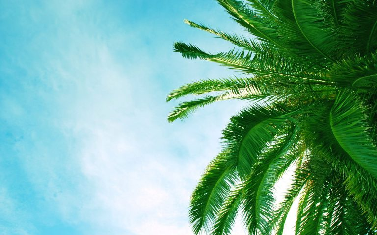 palm wallpaper 109